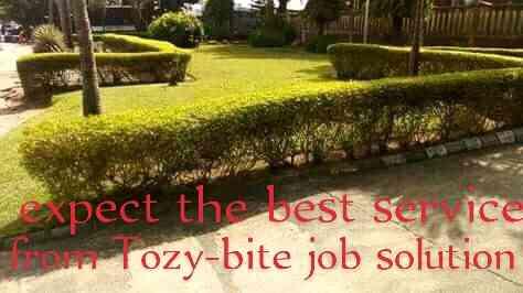 Tozy-bite job solution