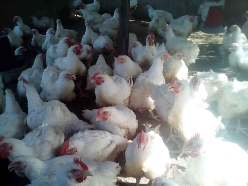 Rumou Farms